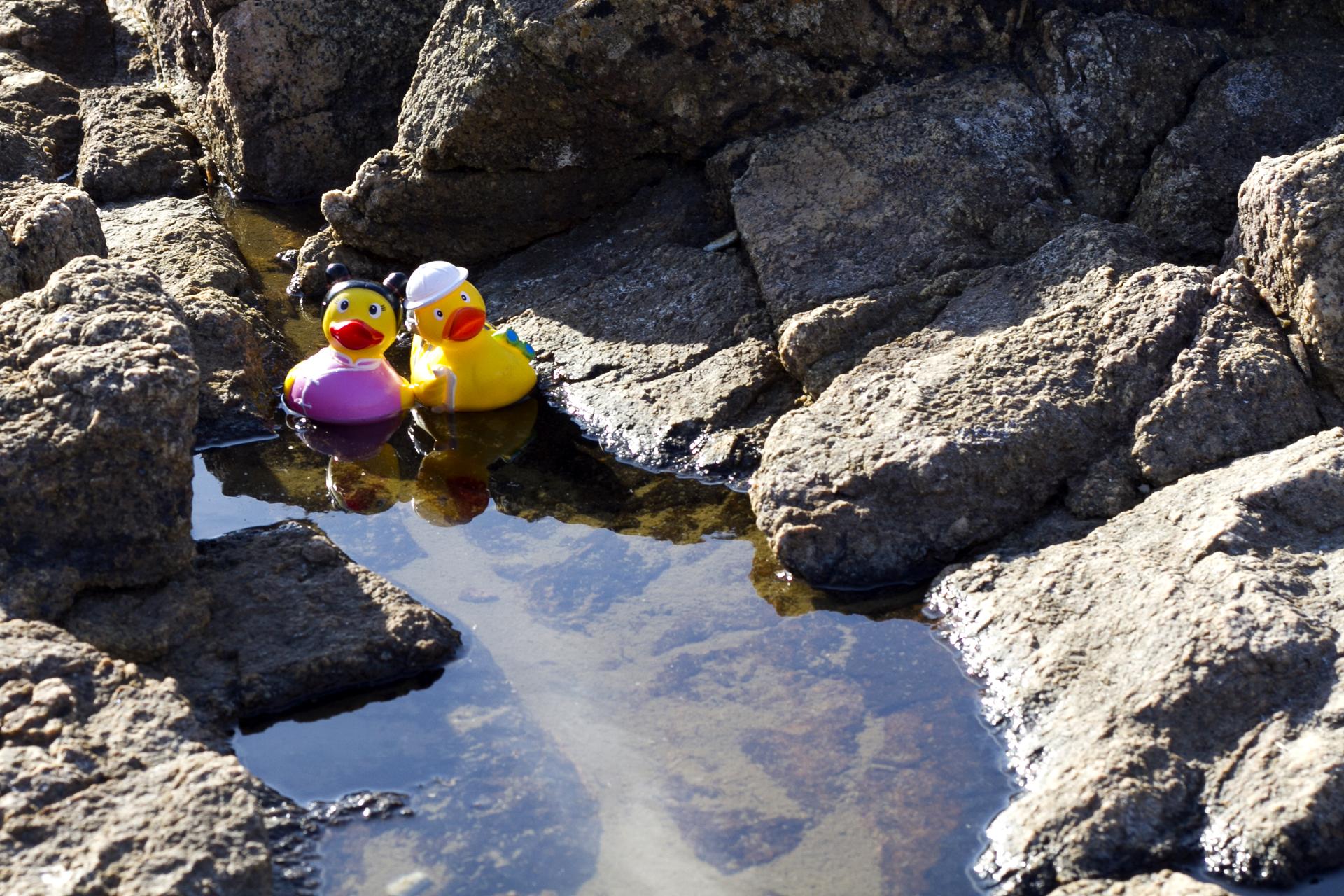 Les Sables d'Olonne - Les canards 1