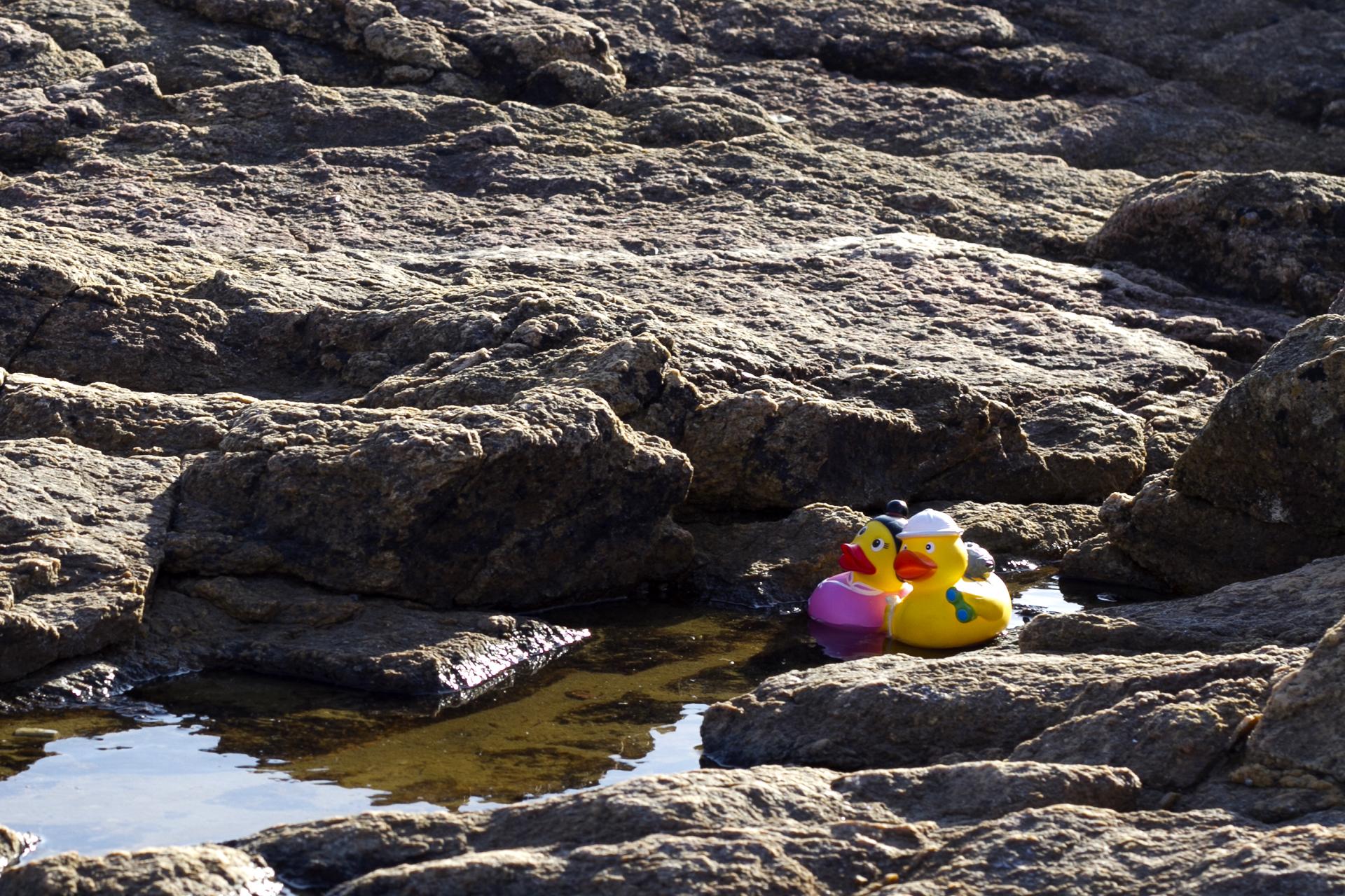 Les Sables d'Olonne - Les canards 2